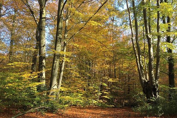 Autumn at Woodcroft School